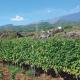 Sentiero delle Ginestre e delle Vigne