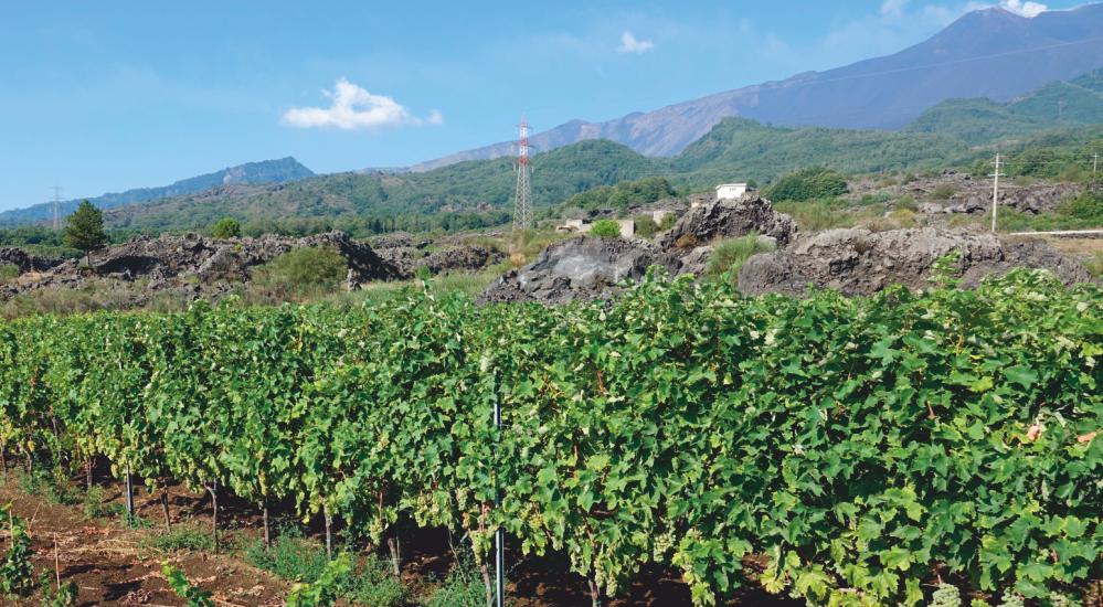 5^ tappa – Da Linguaglossa nella Valle dei Vini